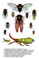 Auchenorrhyncha species.jpg