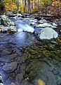 Autumn-forest-stream-flowing-water - Virginia - ForestWander.jpg