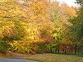 Autumn at Hovingham High Wood - geograph.org.uk - 1143745.jpg