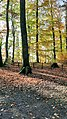 Autumn colors in Sauvabelin park.jpg