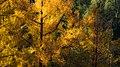 Autumn in Burcina-3.jpg