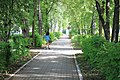 Avenue bordé d'arbres - panoramio.jpg