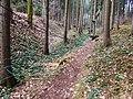 Březová nad Svitavou, Lesní lanový park (2).jpg