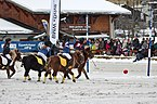 BMW Polo Masters Megève - 20140126 - Démonstration de polo-poney 5.jpg