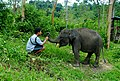 Baby Elephant - panoramio.jpg
