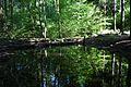 Baden-Württemberg, Schorndorf, Naturdenkmal FND 81190670056 05.jpg