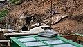 Baifo y gatos en Mancha Blanca, Lanzarote.jpg
