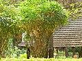 Bamboo (433788113).jpg