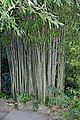 Bamboo December 2014-1.jpg
