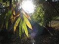 Bamboo Garden (32725582624).jpg