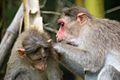 BanarghataZoo Monkey.jpg