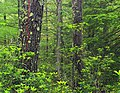 Bark Cabin Natural Area (23) (14394708396).jpg