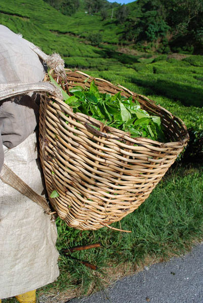 File:Basket greentea 0431.jpg