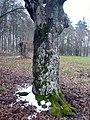 Baumgruppe bei Stangenroth, 3.jpg