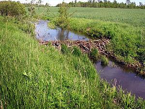 Beaver Castor barrage.jpg