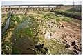 Beersheba. Sheep march (4472922976).jpg