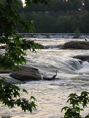 Belle Isle (Richmond, Virginia) - Herons fishing in the rapids.  A view from the northern bank of Belle Isle, across the James River, to the bluffs of Hollywood Cemetery.