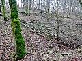 Bemooster Baum - panoramio (1).jpg