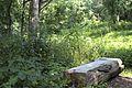 Bench in the woods (14961942305).jpg