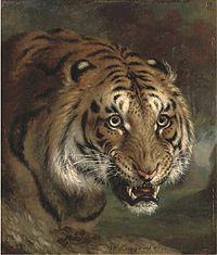 Bengal Tiger d4617011x