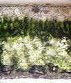 Bifacial leaf cross section.jpg