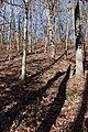 Big Hill Pond State Park trail 2.jpg