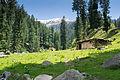 Bikhi camping area on MKM trek.jpg