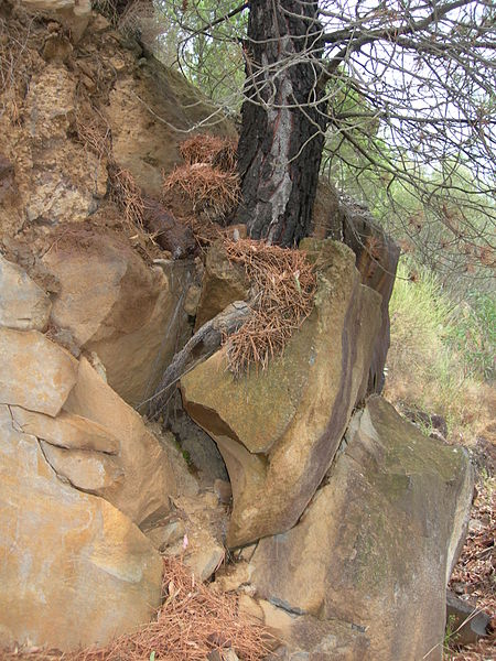 Mechanicé zvetrávanie horniny vplyvom koreňov rastlín