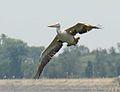 Bird, Tamil Nadu India.jpg