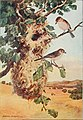 Bird-lore (1909) (14746513571).jpg