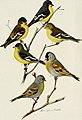 Bird-lore (1910) (14752242661).jpg