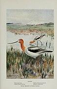 Bird-lore (1916) (14755100542).jpg
