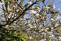 Birds Green, Essex, England - tree blossom at T-junction.jpg