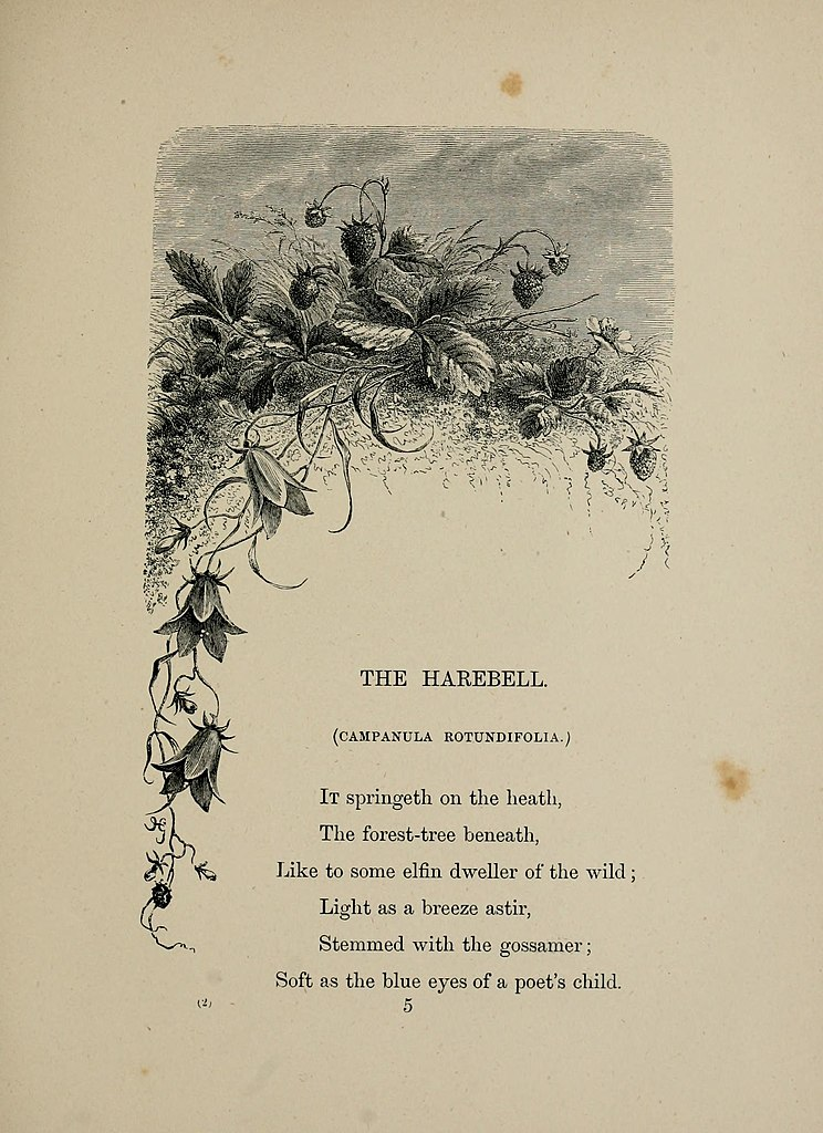 Filebirds and flowers or lays and lyrics of rural life 1873 filebirds and flowers or lays and lyrics of rural life 1873 14755312375g mightylinksfo