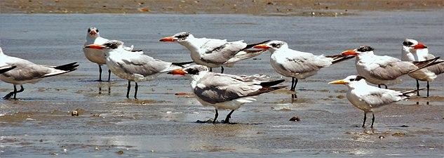 Birds kartong (32049112253).jpg