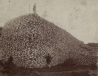 Columbus Delano - Bison skull pile 1870