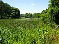 Blue Rock State Park Cutler Lake marsh.JPG