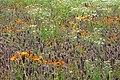 Blumenwiese mit Calendula.jpg