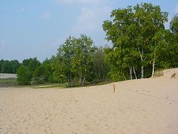 Boberger dune in Lohbrügge