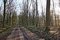 Bois de la Louvière - Livierenbos, Flobecq - Vloesberg 22.jpg