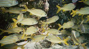 Bonaire Unterwasserwelt