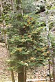 Borjomi Kharagauli National Park (2).jpg
