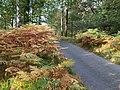 Borrowdale, UK - panoramio (23).jpg