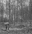 Bosbewerking, arbeiders, boomstammen, Bestanddeelnr 251-8260.jpg
