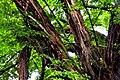 Botanic garden limbe101.jpg