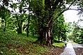 Botanic garden limbe83.jpg