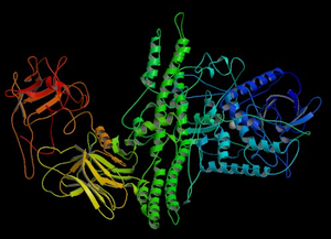 Crystal structure of Botulinum Neurotoxin Sero...