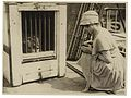 Box Brownie photographer and lion, ca. 1925-ca. 1945, Sam Hood (29715551272).jpg
