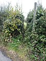 Brackenfield Lane - Public Footpath and Stile - geograph.org.uk - 566420.jpg