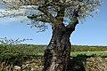 Brandeisatz Baum Flur Böschung (39758560250).jpg